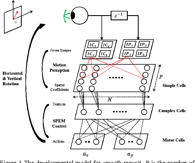 Figure 1 for Intrinsically Motivated Learning of Visual Motion Perception and Smooth Pursuit