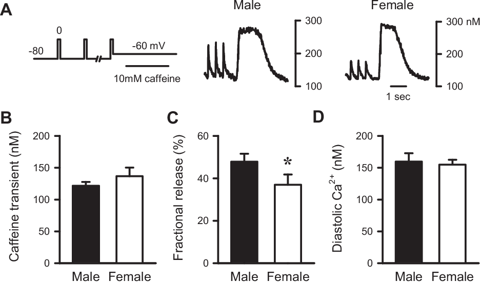Figure 4 from Sex differences in SR Ca(2+) release in murine