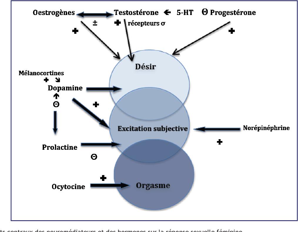 Kvinnelig orgasme diagram
