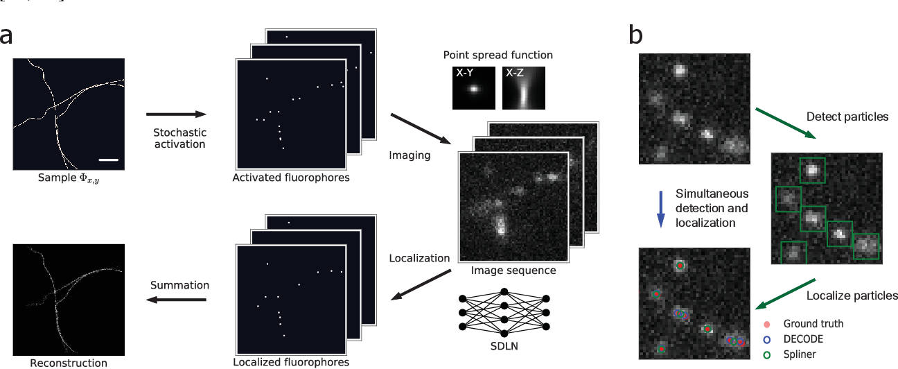 Figure 1 for Teaching deep neural networks to localize sources in super-resolution microscopy by combining simulation-based learning and unsupervised learning