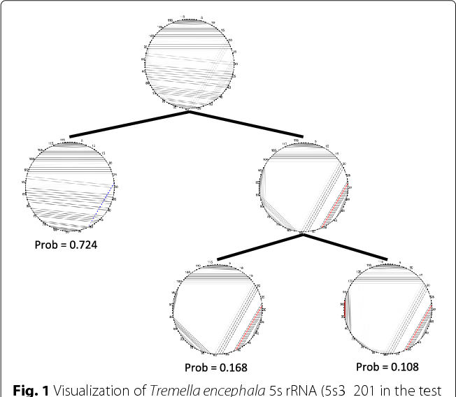 Figure 1 From Characterization And Visualization Of Rna Secondary