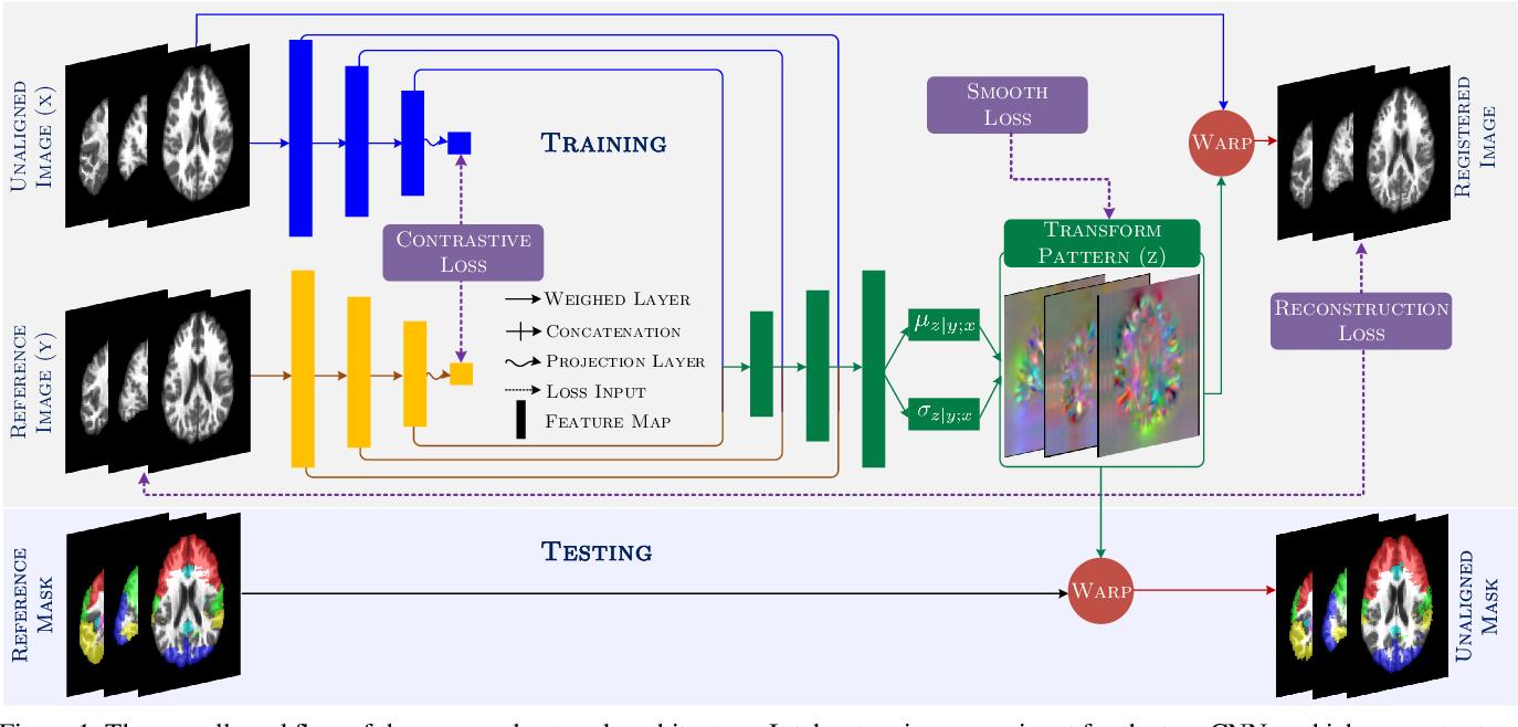 Figure 1 for Contrastive Registration for Unsupervised Medical Image Segmentation