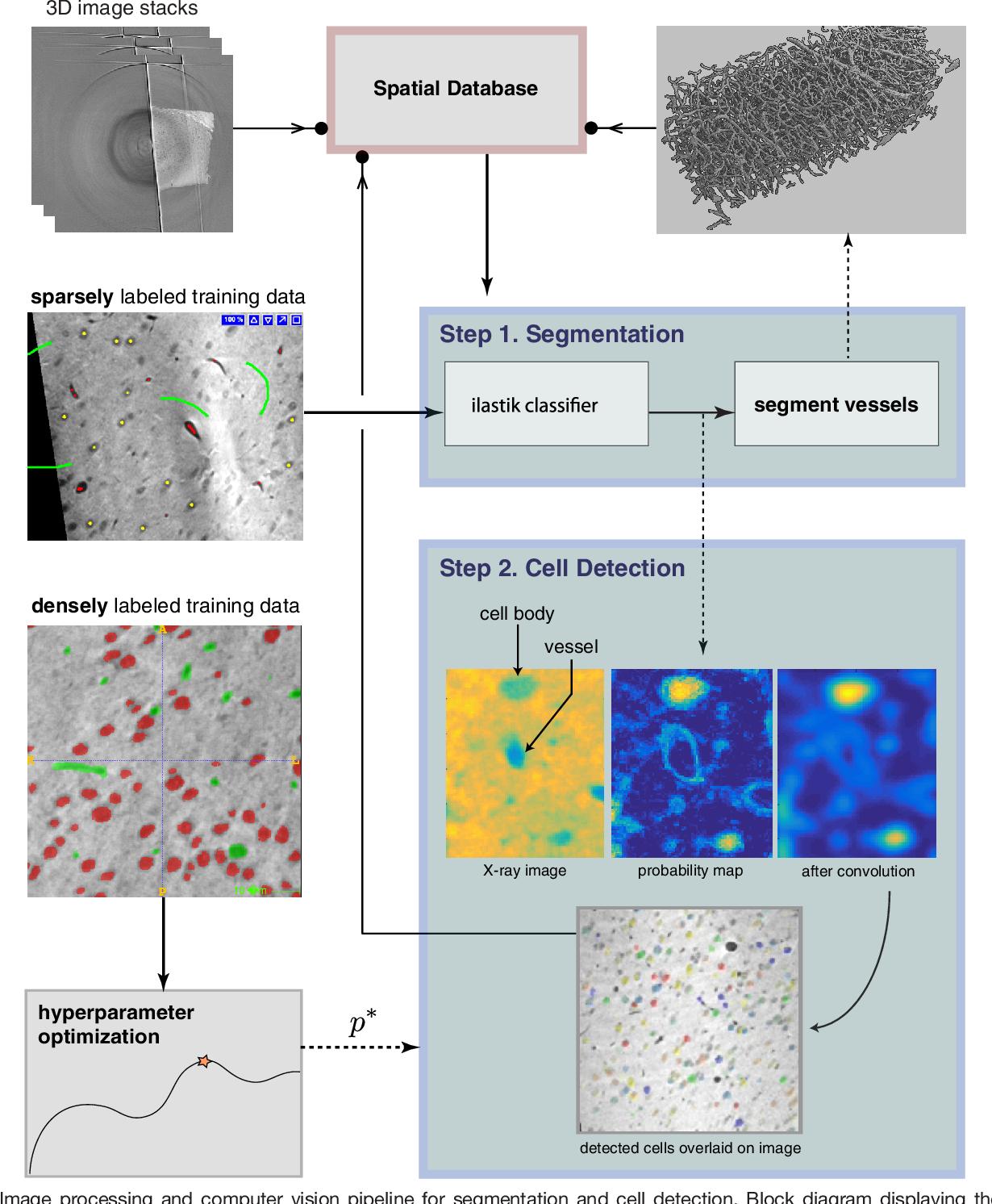 Figure 4 for Quantifying mesoscale neuroanatomy using X-ray microtomography