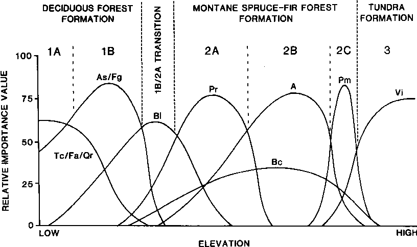 Identification of the Red Spruce