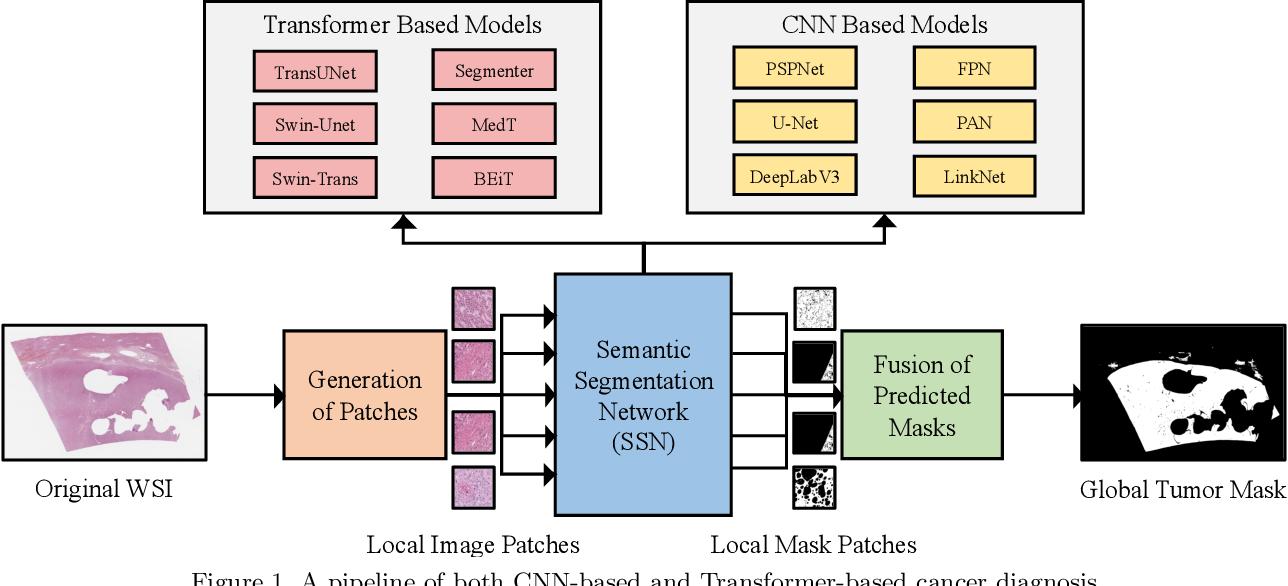 Figure 2 for Evaluating Transformer based Semantic Segmentation Networks for Pathological Image Segmentation