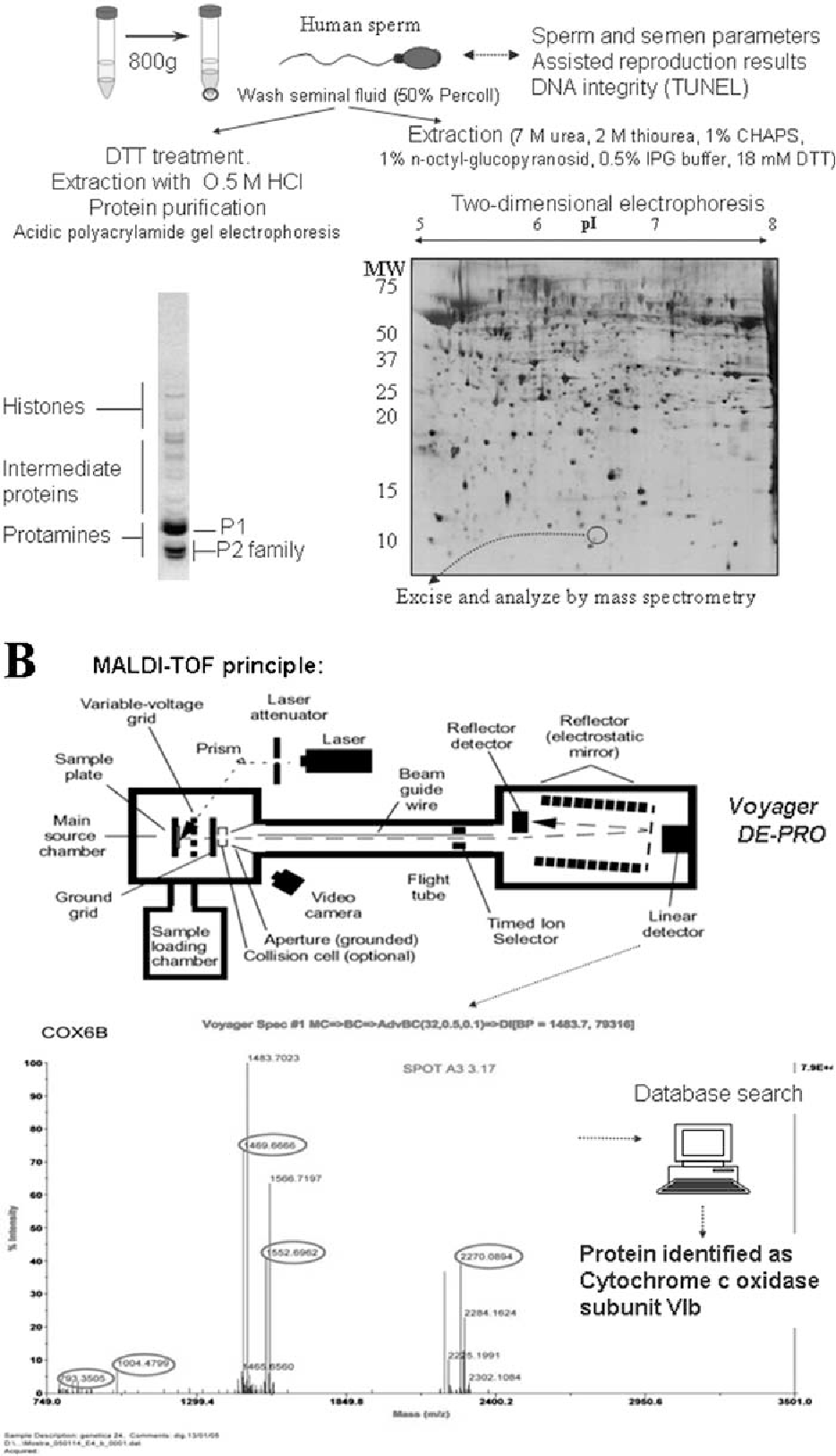 Proteomics in the study of the sperm cell composition figure 1 ccuart Images