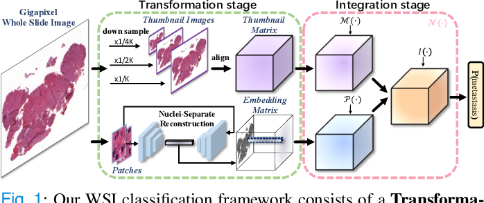 Figure 1 for DSNet: A Dual-Stream Framework for Weakly-Supervised Gigapixel Pathology Image Analysis