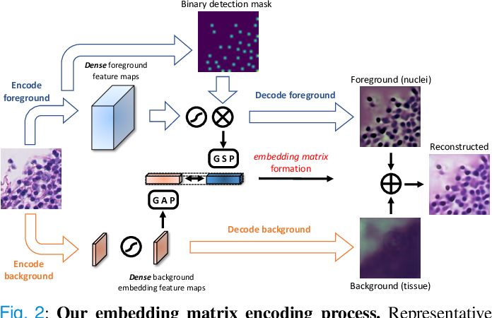 Figure 3 for DSNet: A Dual-Stream Framework for Weakly-Supervised Gigapixel Pathology Image Analysis