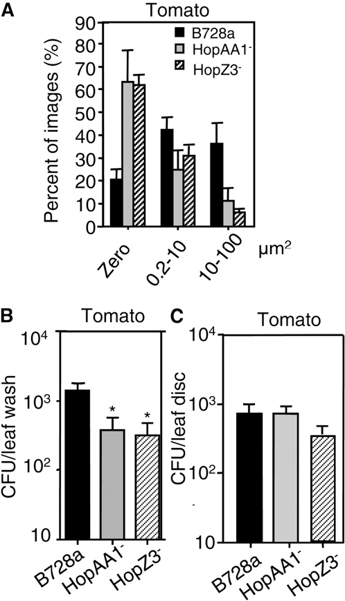 Figure 6. HopAA1 and HopZ3 are important for epiphytic fitness of PsyB728a on tomato 76R. PsyB728a and mutants carrying Ptrp-gfp at an OD600 of 0.01 were sprayed onto 17- to 21-d-old tomato 76R. All bars indicate SEs. A, After 72 h, the populations of HopZ3- andHopAA1were reduced compared to PsyB728a. A x2 test indicated that the distributions were significantly different between the deletion mutants and PsyB728a (HopAA1-, P , 0.0001, n $ 48; HopZ3-, P , 0.0001, n$ 48). This experiment was done together with HrcC- bacteria (see Fig. 1D). Thus, the PsyB728a data are the same as that shown in Figure 1D. B, Leaf disks were washed to remove and enumerate bacteria in the attached biomass. Reductions in the mutant bacterial populations compared with PsyB728a after 72 h were statistically significant (*P , 0.05, MannWhitney test, n = 12). C, Endophytic bacteria population of HopAA1- and HopZ3- from Figure 6B was not significantly different compared with PsyB728a after 72 h (HopAA1-, P = 0.90, HopZ3-, P = 0.3556, n$ 12 for both). These experiments were repeated twice with similar results.
