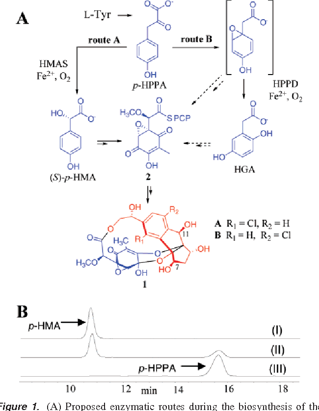 Figure 1 From Unraveling The Biosynthesis Of The Sporolide