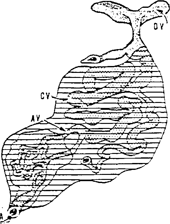 Figure 1 From Title Arteriovenous Anastomoses And Thermoregulation