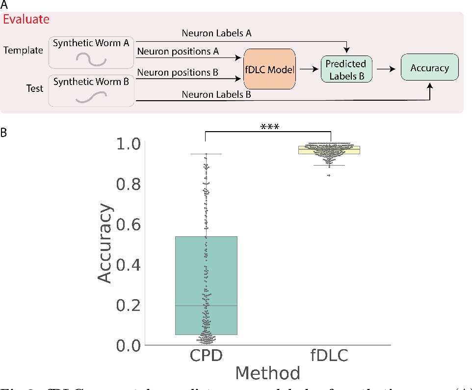 Figure 2 for Fast deep learning correspondence for neuron tracking and identification in C.elegans using synthetic training