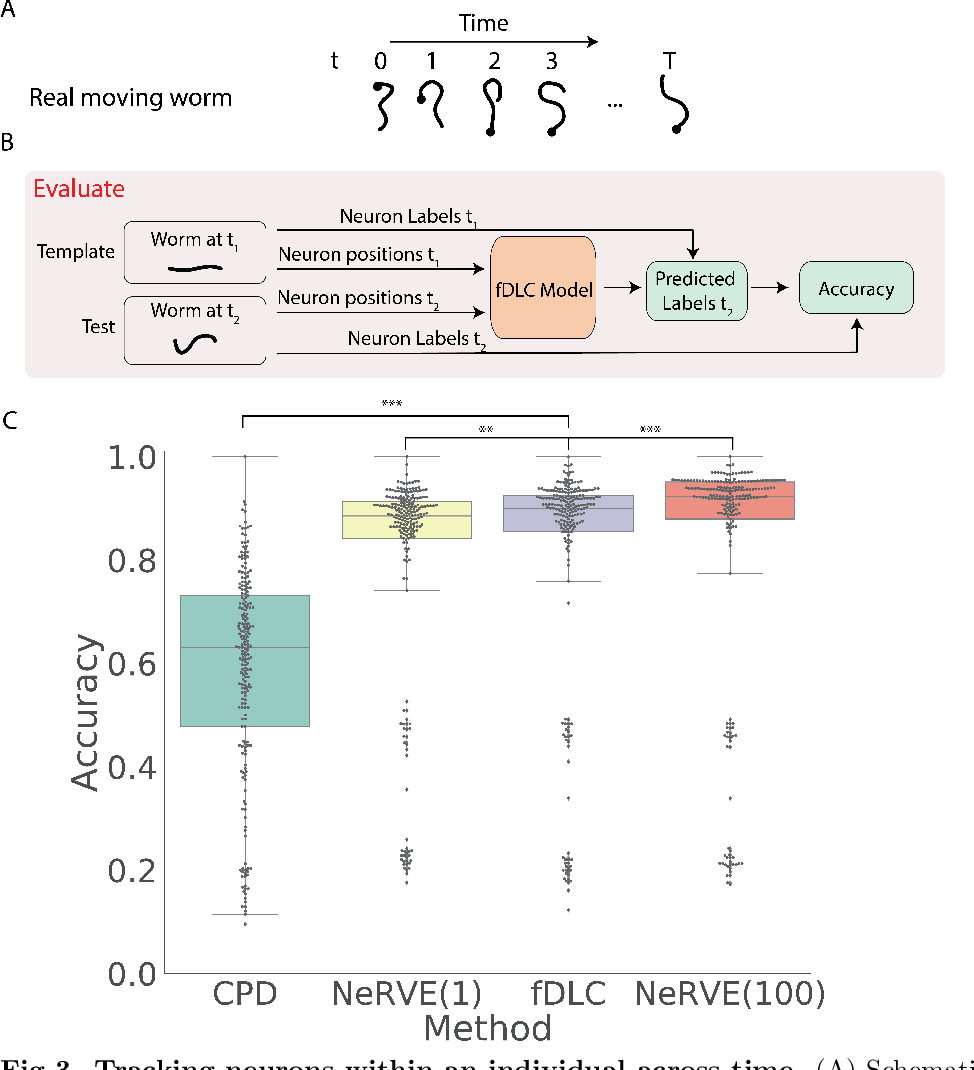Figure 3 for Fast deep learning correspondence for neuron tracking and identification in C.elegans using synthetic training