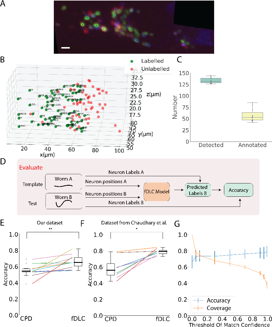 Figure 4 for Fast deep learning correspondence for neuron tracking and identification in C.elegans using synthetic training