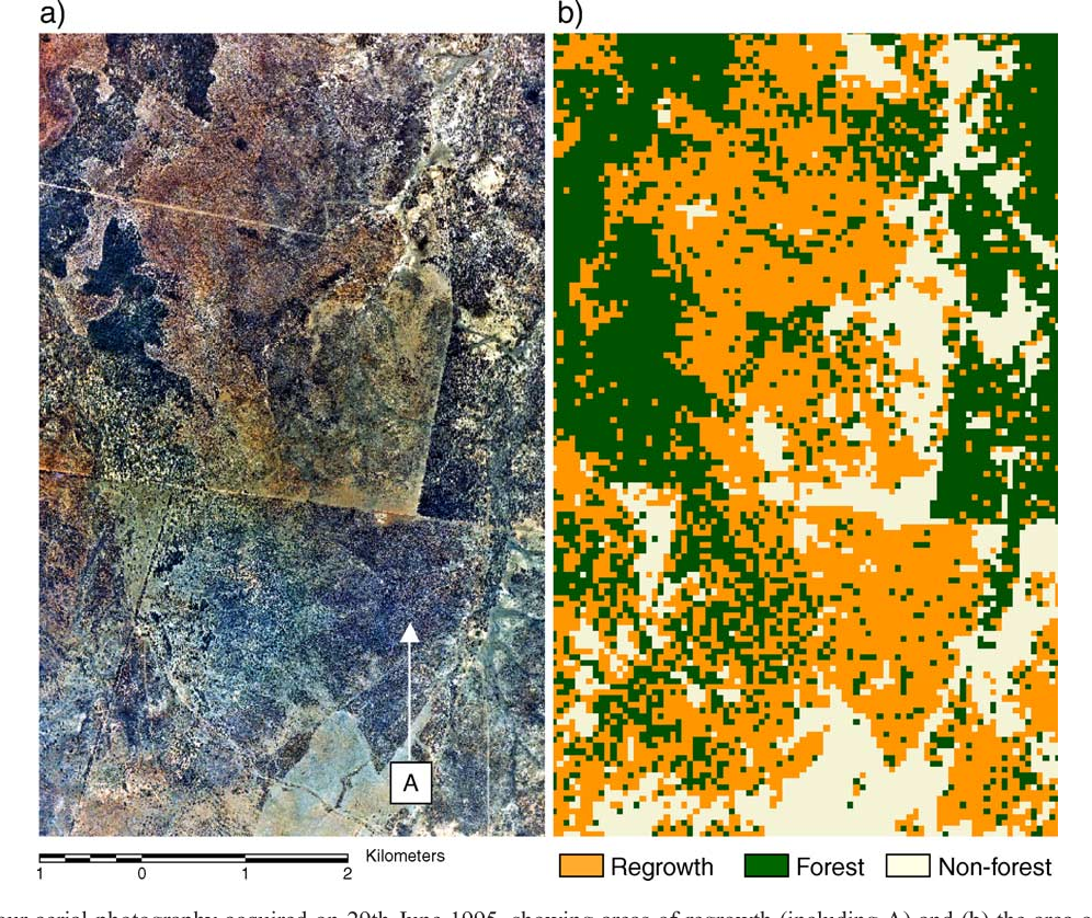 Fig. 10. (a) 1:40,000 colour aerial photography acquired on 29th June 1995, showing areas of regrowth (including A) and (b) the area of regrowth mapped using 1995 JERS-1 SAR L-band HH and FPC data. A close correspondence with areas mapped using Landsat FPC/JERS-1 SAR L-band HH and observed within the photography is evident. Much of this area was classified as remnant vegetation using a threshold of FPC data alone.