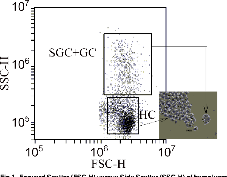 Fig 1. Forward Scatter (FSC-H) versus Side Scatter (SSC-H) of hemolymph fromChionoecetes bairdi, Tanner Crab.