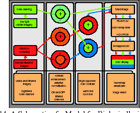 Fig 14. A Schematic of a Model for Biologically-inspired Image Fusion