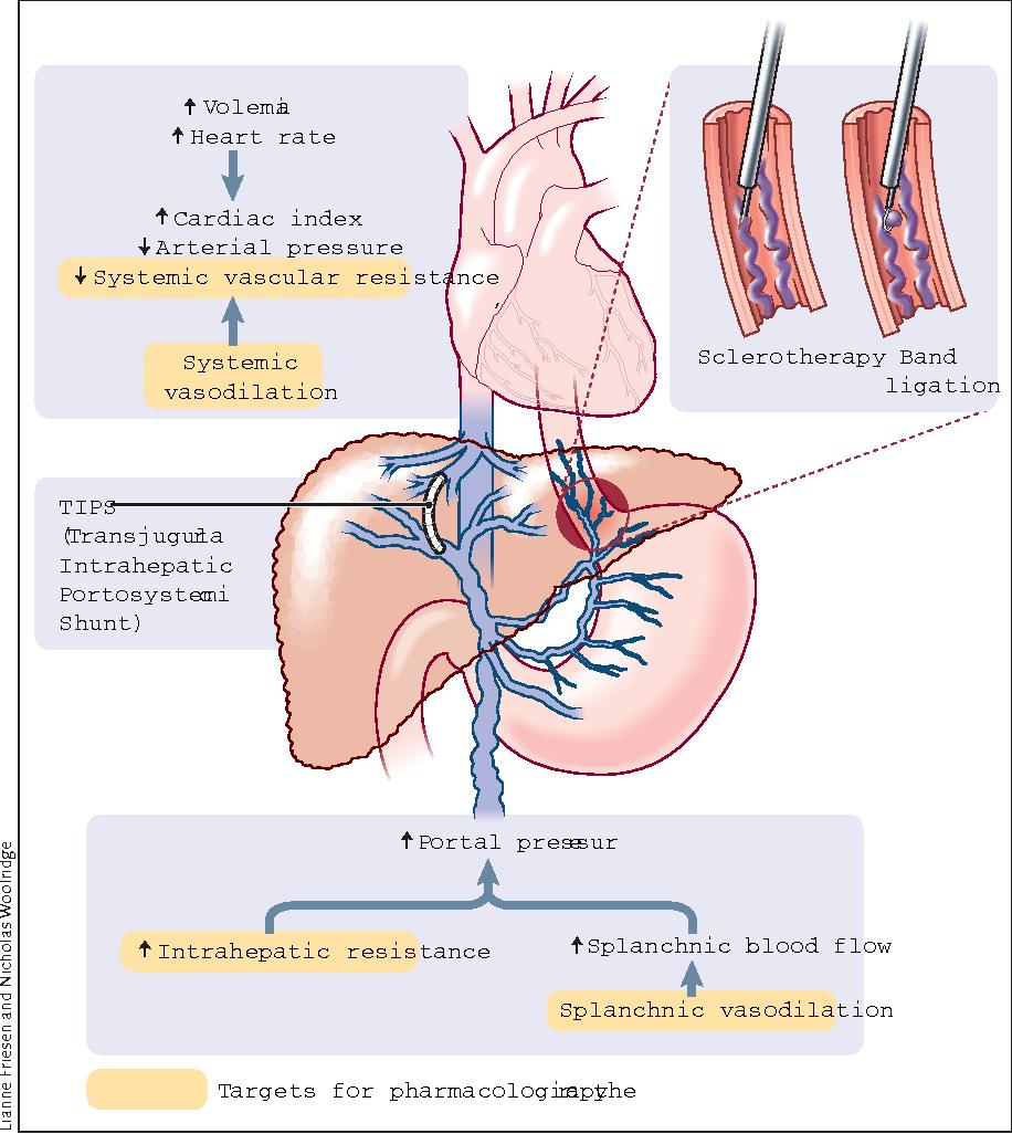 blood tests for portal hypertension