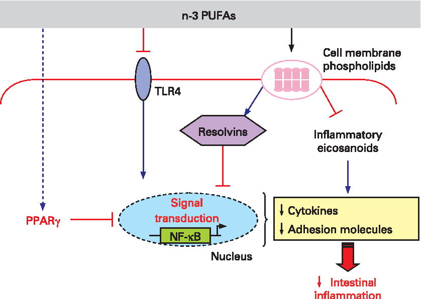 peroxisome proliferator-activated receptor gamma signaling pathway