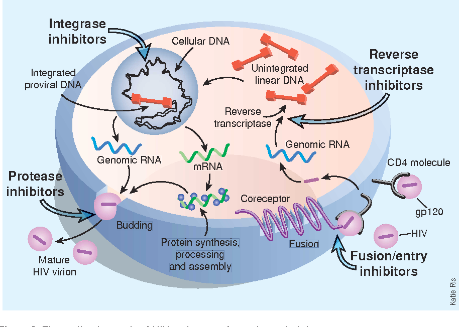 figure 2 the replication cycle of hiv and targets for antiretroviral  therapy