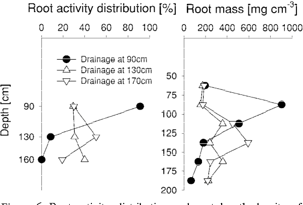 Figure 6 from Subsoil root activity in tree-based cropping systems