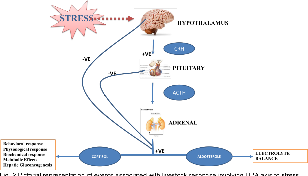 figure 2 from significance of hypothalamic