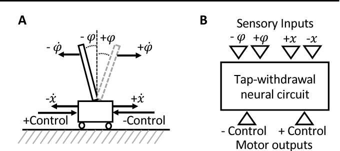 Figure 3 for Neuronal Circuit Policies