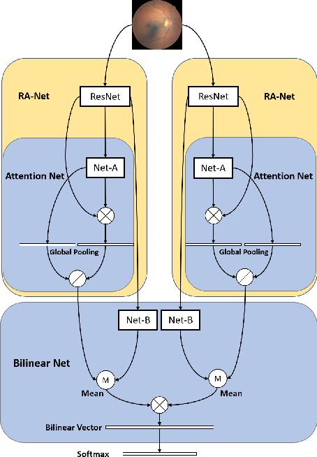 Figure 1 for BiRA-Net: Bilinear Attention Net for Diabetic Retinopathy Grading