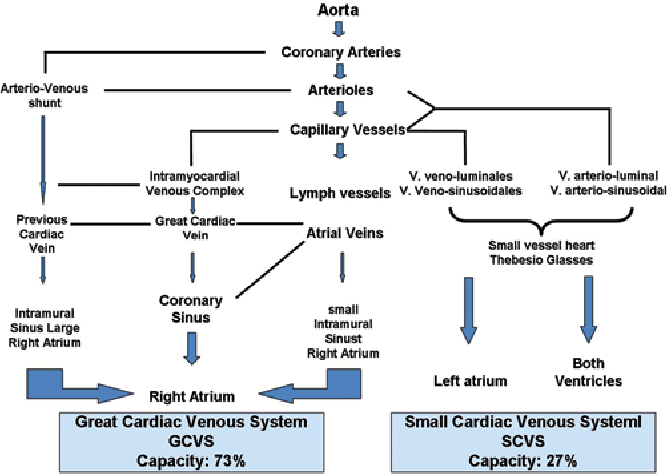 Figure 1 From Myocardial Venous Drainage From Anatomy To Clinical