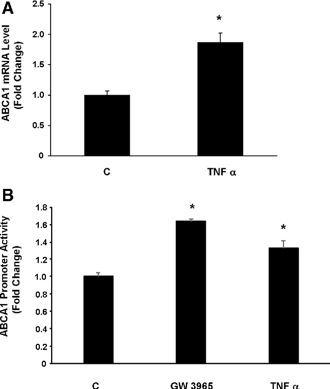 Fig. 4 Effect of TNF a on ABCA1 mRNA and promoter activity in MLO-Y4 osteocytes. aMLO-Y4 cells were treated with either solvent or 50 ng/ml TNF a for 24 h and ABCA1, and cyclophilin mRNA levels were measured by quantitative real-time PCR. Treatment with TNF a increased ABCA1 mRNA levels. N = 6; *p\ 0.005, relative to control cells. b MLO-Y4 cells were transfected with the ABCA1 reporter plasmid phABCA1.Luc and treated with solvent (c), 10 lM GW 3965, or 50 ng/ml TNF a for 24 h. Treatment with both the LXRa agonist GW 3965 and TNF a significantly increased ABCA1 promoter activity. N = 6; *p\ 0.0001 and p\ 0.001 relative to control cells