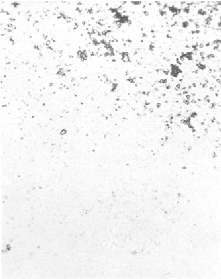 Fig. 8, Higher power view of yolk platclets. Calcium is moving into the preparation from the lower left. Magnification: 350X.