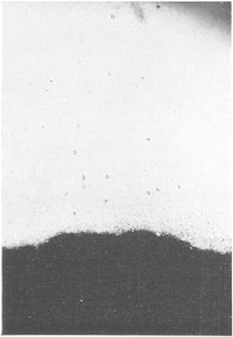 Fig. 4. Surface of the exudate of a All the ext rac ts ment ioned above pigmented obcyte broken in isotonic which caused an s . p . r , in the f r o g sodium citrate. Magnification: 80X. egg had a hydrogen ion concentrat ion