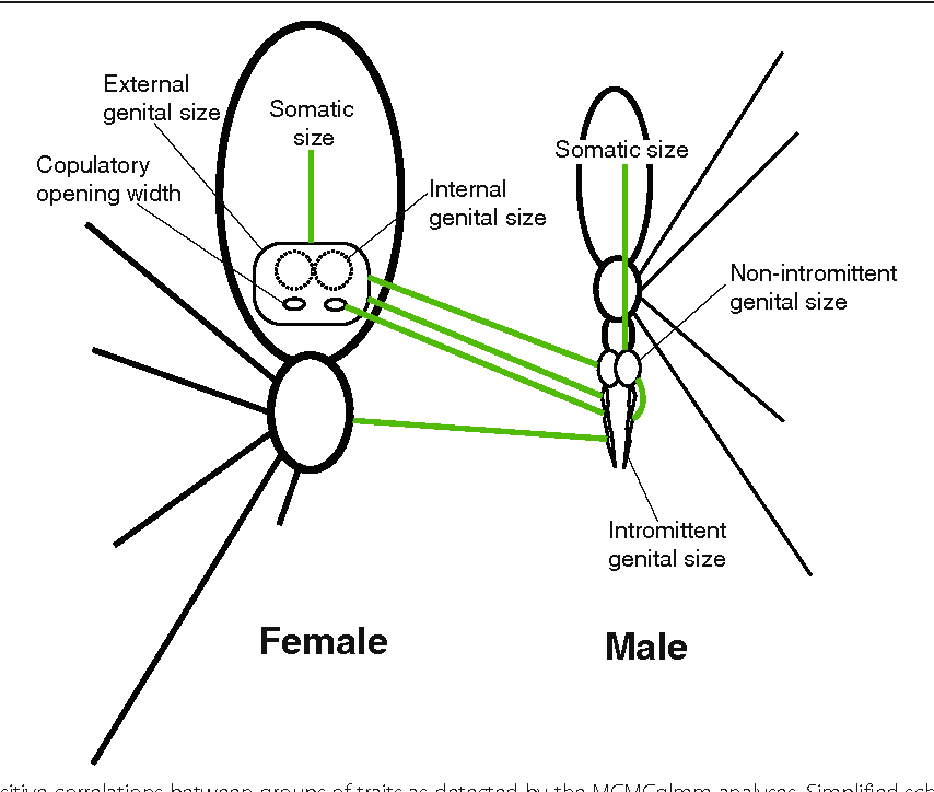 Coevolution Of Female And Male Genital Components To Avoid Genital