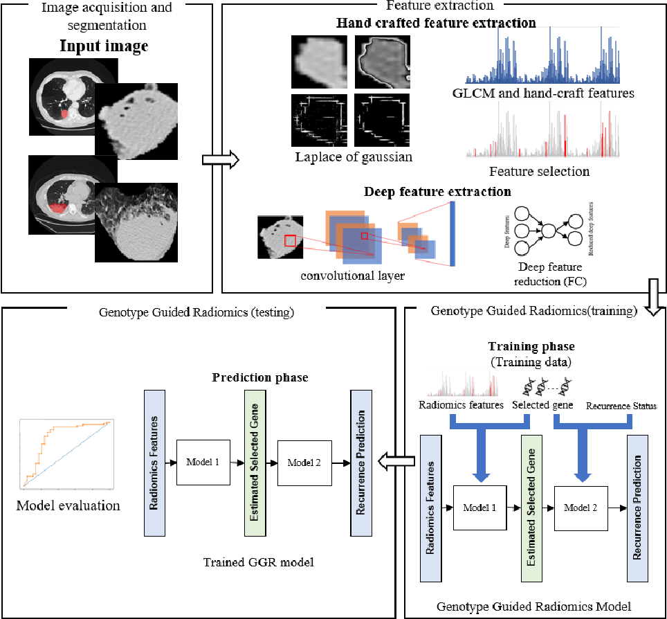 Figure 1 for Genotype-Guided Radiomics Signatures for Recurrence Prediction of Non-Small-Cell Lung Cancer