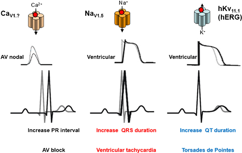 A tutorial on model informed approaches to cardiovascular