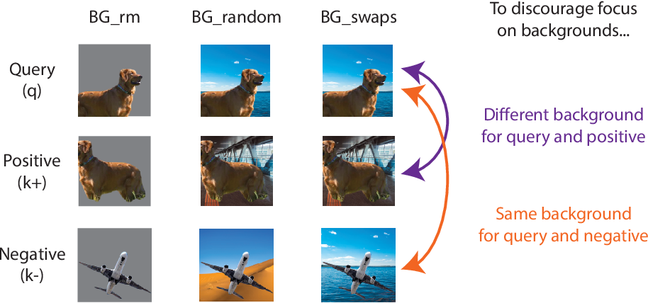 Figure 1 for Leveraging background augmentations to encourage semantic focus in self-supervised contrastive learning