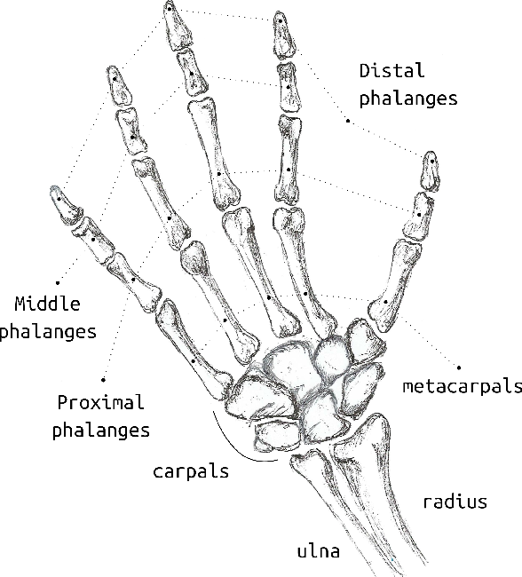 Figure 1 for Design method for an anthropomorphic hand able to gesture and grasp