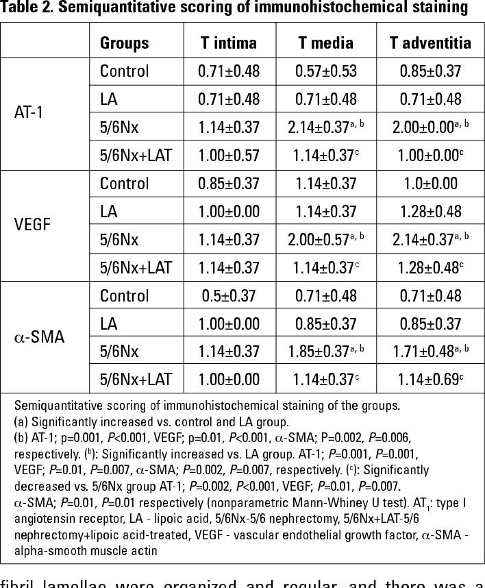 Table 2. Semiquantitative scoring of immunohistochemical staining