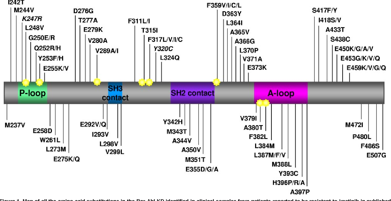 Rapid induction of resistance to BCR-ABL kinase inhibitors