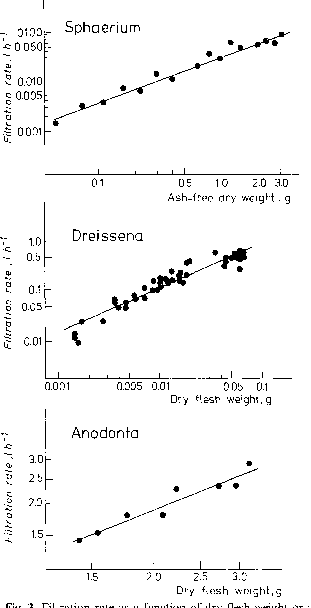 Fig. 3. Filtration rate as a function of dry flesh weight or ashfree dry weight in Sphaeriurn corneum, Dreissena polymorpha, and Anodonta anatina. Regression equations are shown in Table t