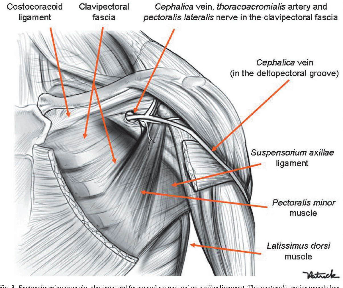Anatomy of the Thoracic Wall , Axilla and Breast - Semantic Scholar