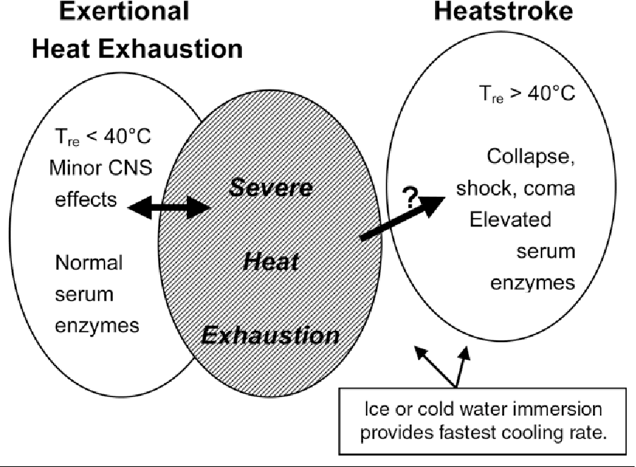 Figure 1 from Return to exercise training after heat
