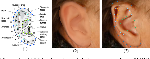 Figure 1 for A Human Ear Reconstruction Autoencoder