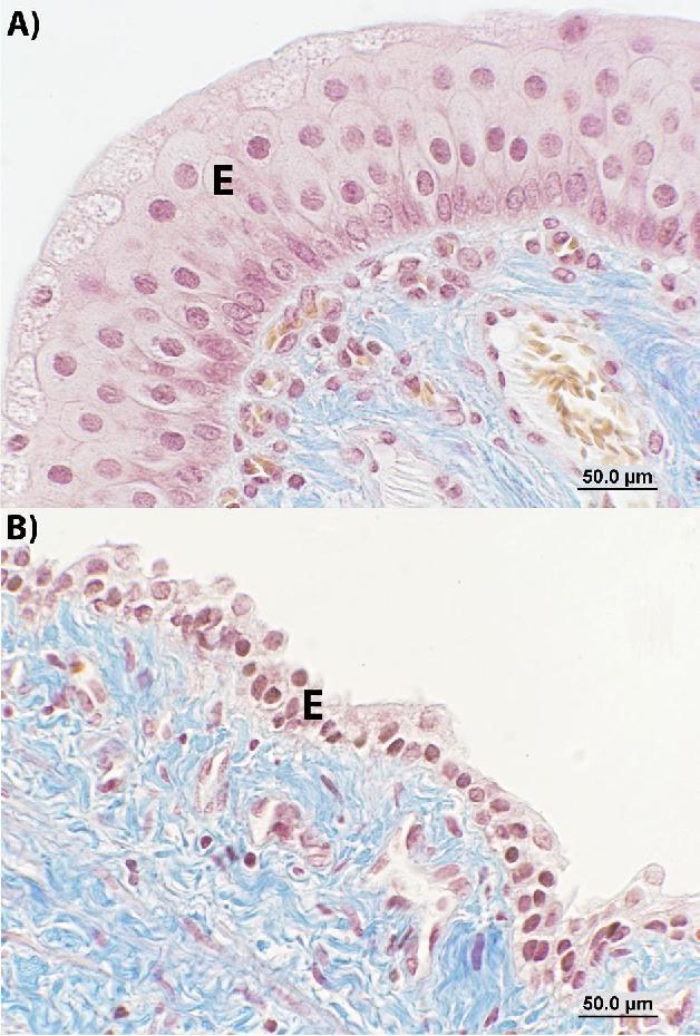 Microscopic anatomy and ultrastructure of the Camelus dromedarius ...