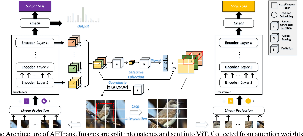 Figure 3 for A free lunch from ViT:Adaptive Attention Multi-scale Fusion Transformer for Fine-grained Visual Recognition