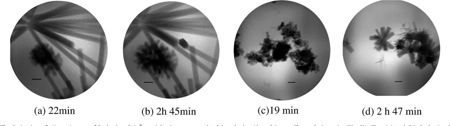 Fig. 3. In situ soft X-ray images of hydrating C4A3 S particles in a saturated calcium Ca(OH)2 + CaSO4 2H2O saturated solution. Figs. (c) and (d): hydration in solutions with 1 lm. (a) 22 min (b) 2 h 45 min (c)19 min (d) 2 h 47 min.