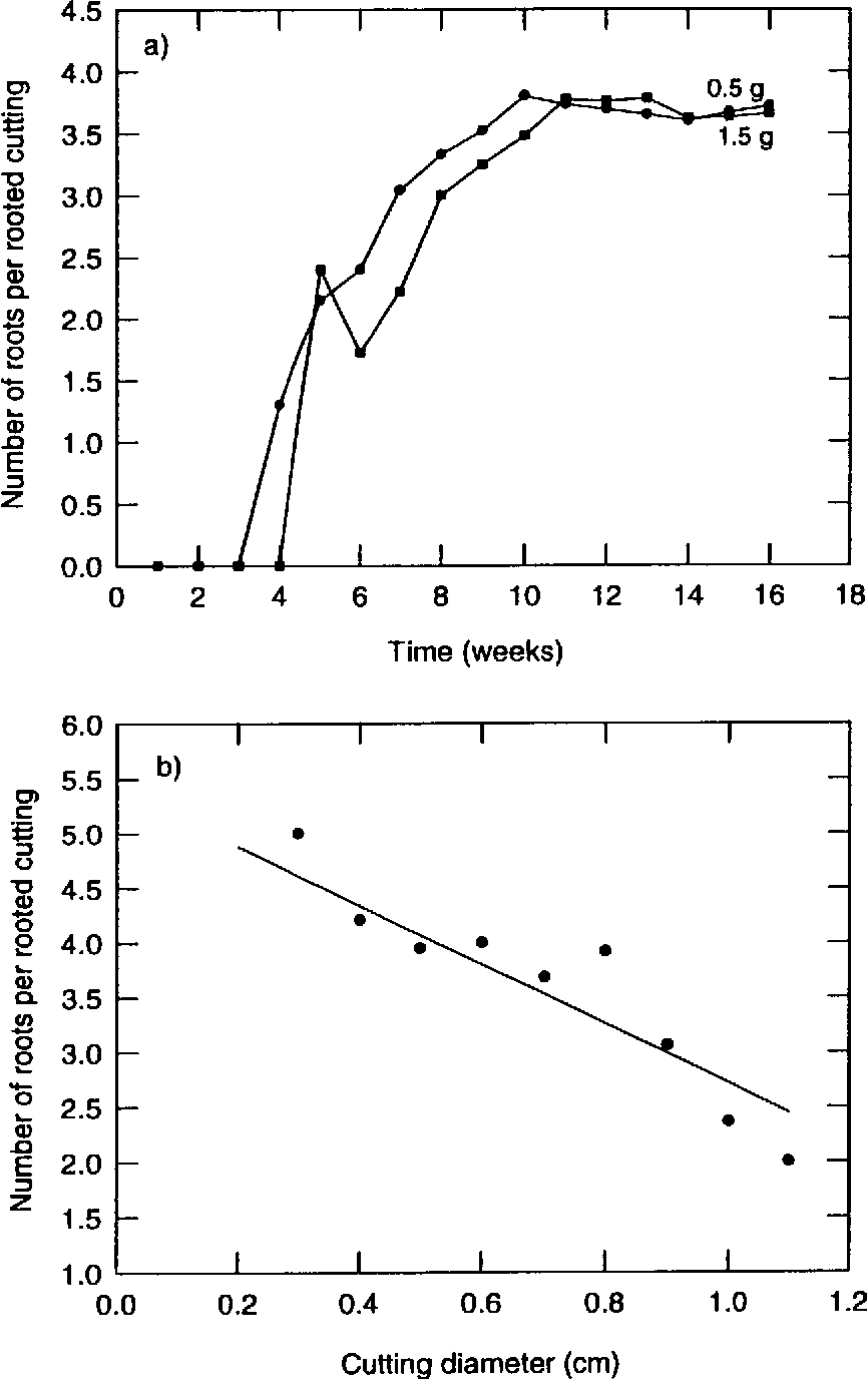 Figure 7 6 from Vegetative propagation of Shorea leprosula Miq  by