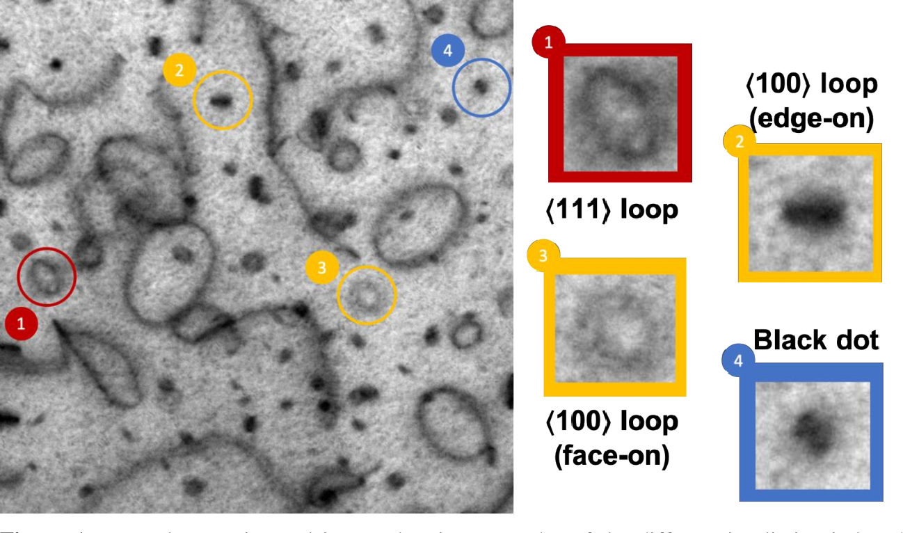 Figure 1 for Performance, Successes and Limitations of Deep Learning Semantic Segmentation of Multiple Defects in Transmission Electron Micrographs