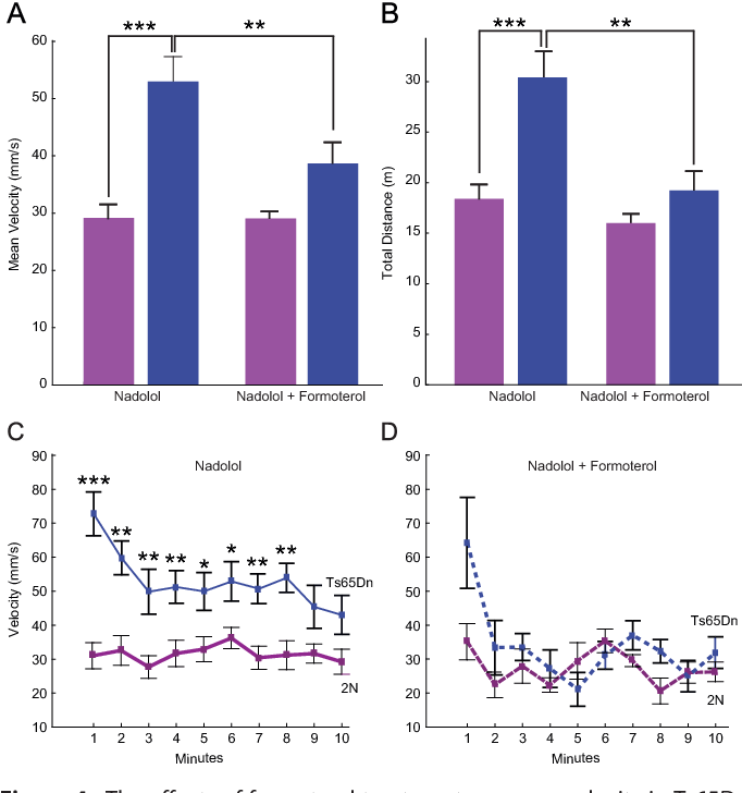 Figure 4. The effects of formoterol treatment on mean velocity in Ts65Dn and 2N mice. (A) Kuskal-Wallis test showed significant differences in velocity (p ¼ .002) between the groups studied. Mann-Whitney U test showed a significant difference between 2N and Ts65Dn mice treated with nadolol (***p .01), a significant reduction in velocity in Ts65Dn mice (**p ¼ .008), and a modest but not significant decrease in 2N mice (p ¼ .503) treated with formoterol (velocity in mm/sec: 2N-nadolol ¼ 31.465 2.74, n ¼ 15; 2N-formoterol ¼ 27.523 1.72, n ¼ 7; Ts65Dnnadolol ¼ 52.965 4.59, n ¼ 12; Ts65Dn-formoterol ¼ 33.682 3.85, n ¼ 7). (B) A similar effect was found in the total distance traveled in 10 min. Kuskal-Wallis test showed significant differences in the total distance traveled (p ¼ .002) between the groups studied (p .01). Mann-Whitney U test showed differences similar to A (**p .01; *p .01). (C, D) Quantification of the velocity of each mouse within the first 10 min of exposure to the open field arena. Formoterol treatment caused a significant reduction in the velocity of Ts65Dn mice throughout the 10-min exposure to the open field arena (*p .01).