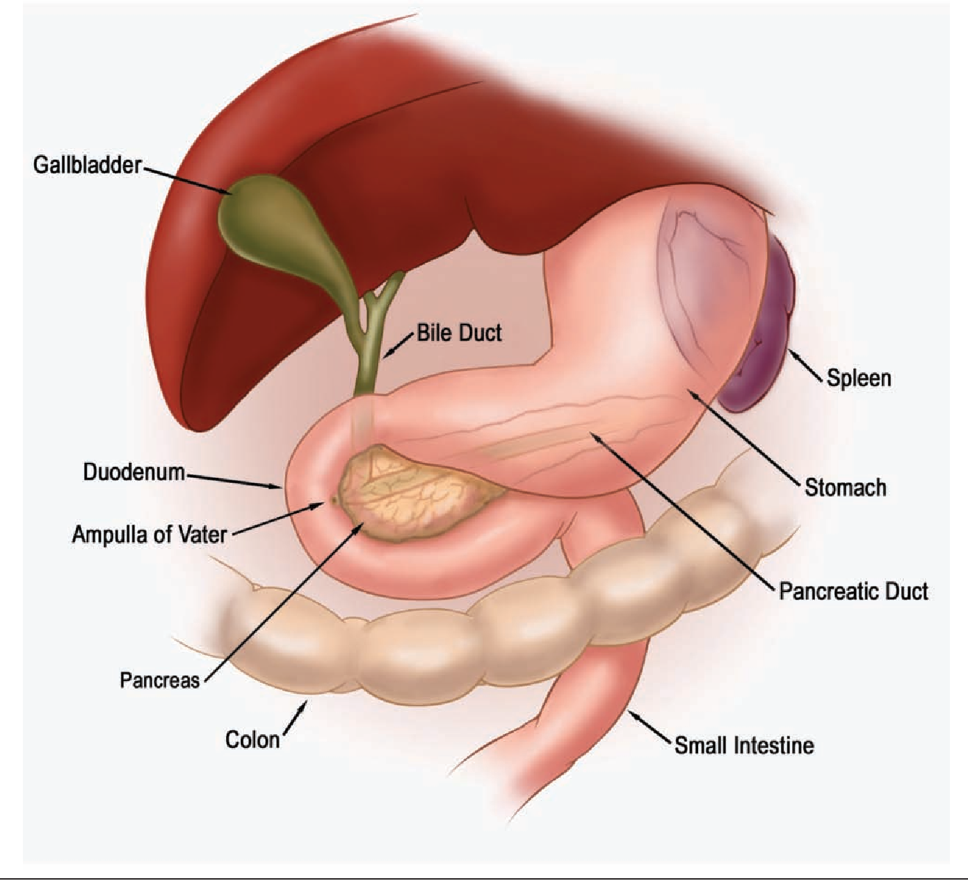 Figure 1 from Nutrition and pancreaticoduodenectomy. - Semantic Scholar